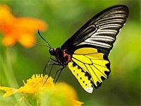 Продажа бабочек