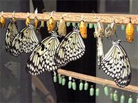 Уход за бабочками