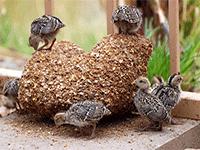 Содержание птицы